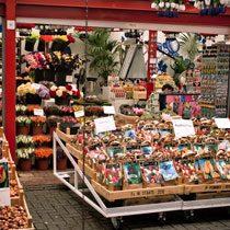 Цветочный-рынок-Амстердама