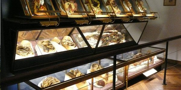 Музей-Естествознания