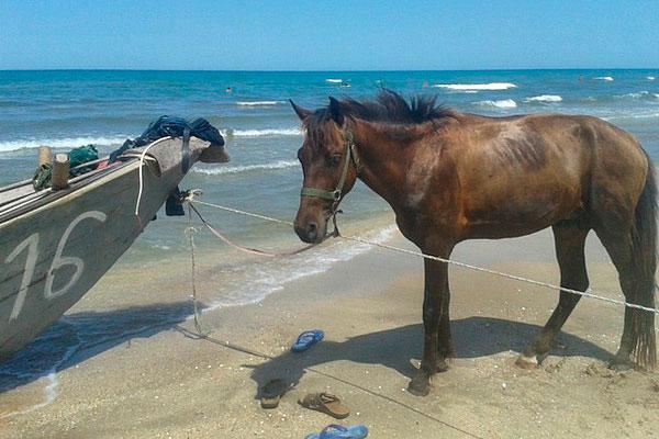 Лошадь на пляже.