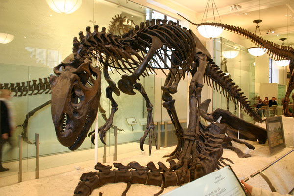Выставка время динозавров в Казани.