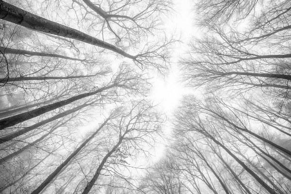 Венский лес.