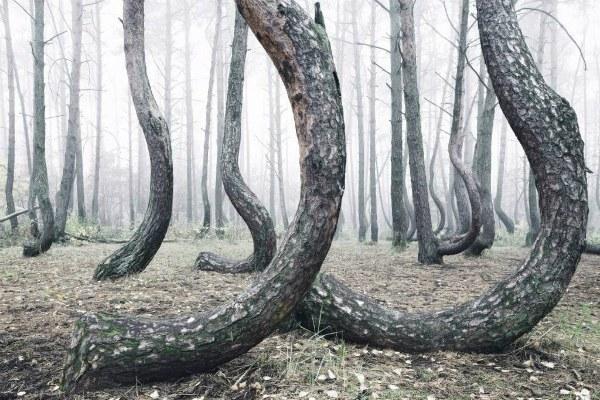 Деревья.