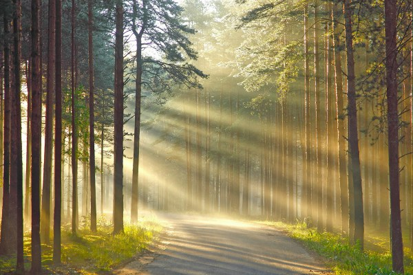 Лес и солнце.