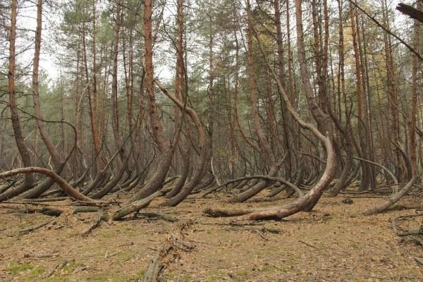Кривые деревья.