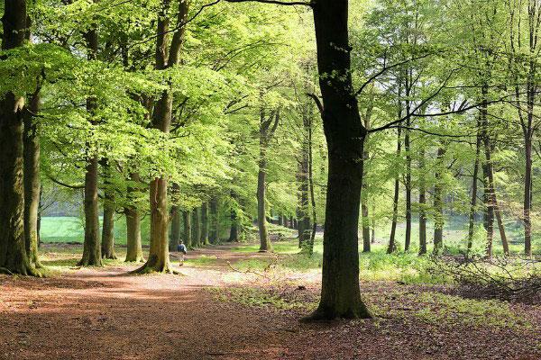 Амстердамский лес.