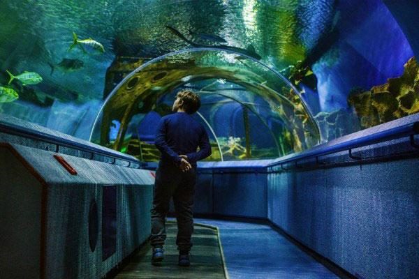 Рыбы в океанариуме.