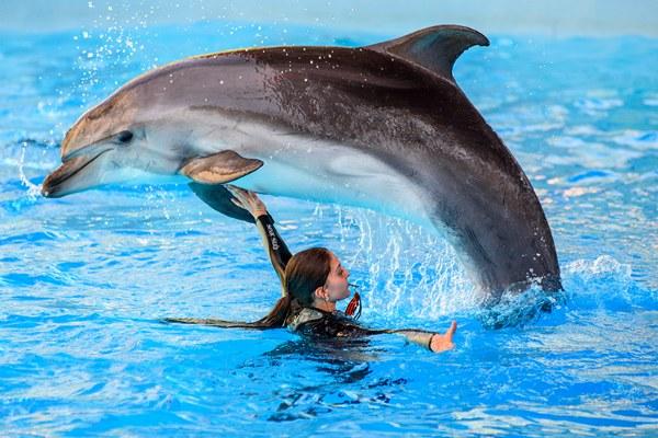 Шоу дельфинов.