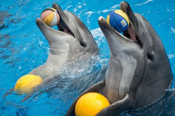 В дельфинарии.