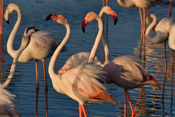 Парк фламинго.