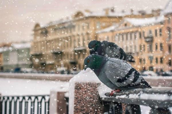 Первый снег в осеннем Питере.