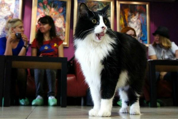 Республика кошек.
