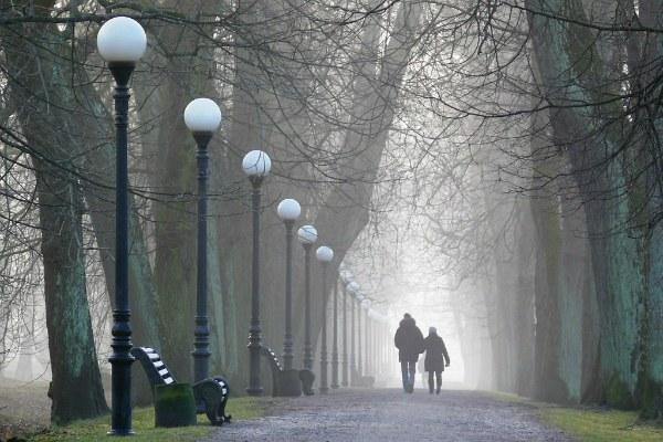 Парк в тумане.