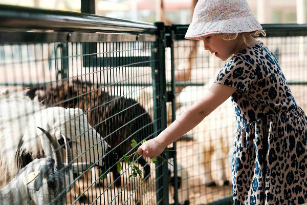 Зоопарк в Дубае.