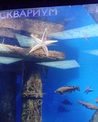 Морские животные.