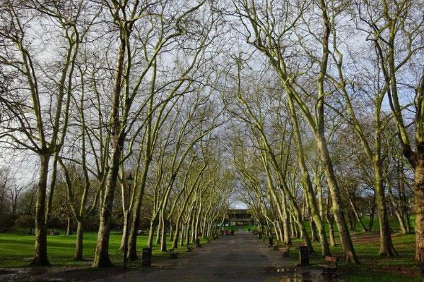 Парк весной.