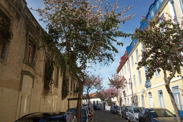 Цветущие улочки Лиссабона в апреле.