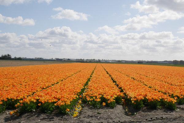 Цветущие поля.