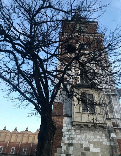 Башня замка.