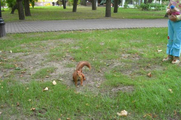 Белка в парке.