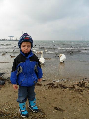 Лебеди.