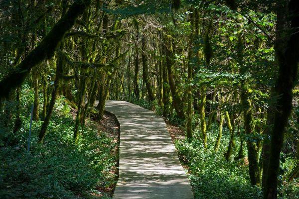 Таинственный лес.