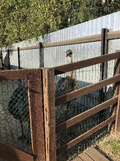 Страусы в зоопарке.