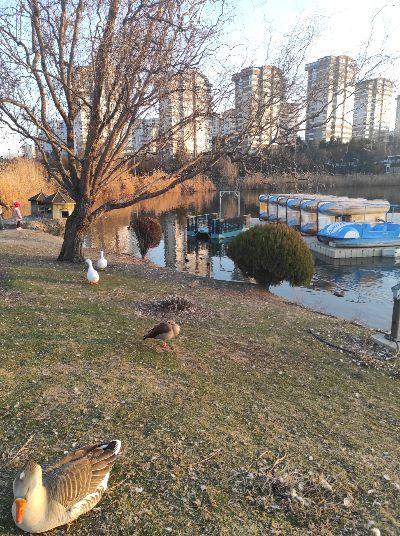 Весенний парк.
