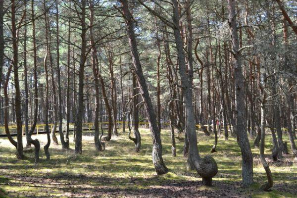 Необычный лес.