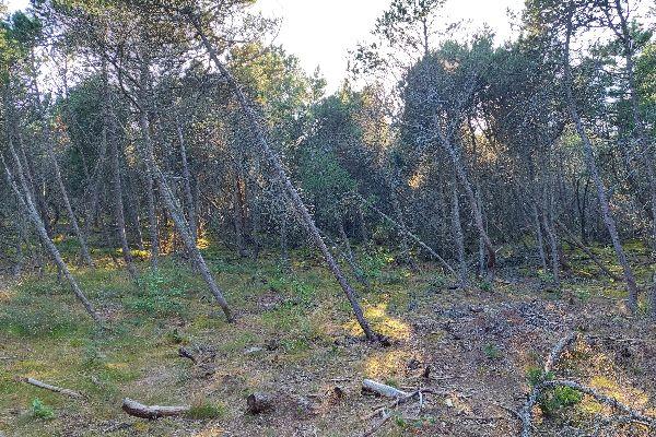 Лесные тропы.