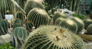 растения ботанического сада.